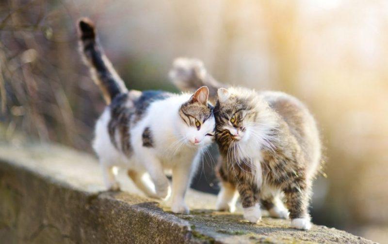 Animals That Start with C (Cat)