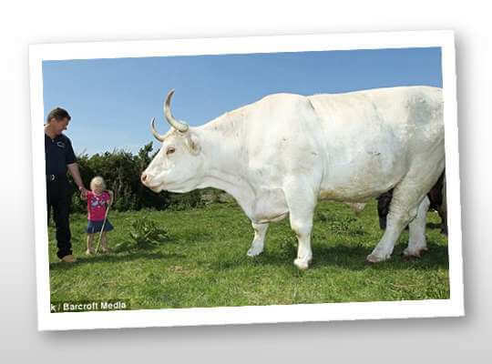 the big animal in the world