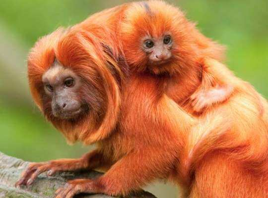 list of species that are endangered