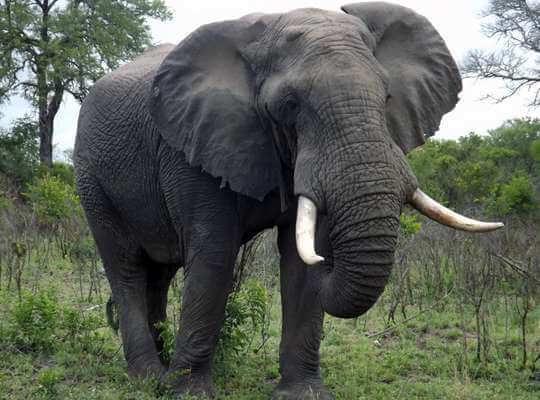 name of big animal