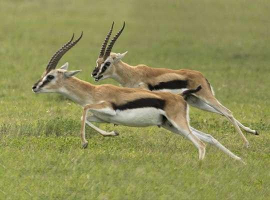 the fastest animal