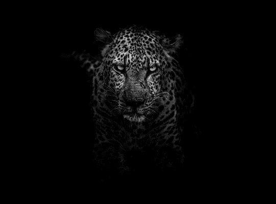 Facts about a Jaguar