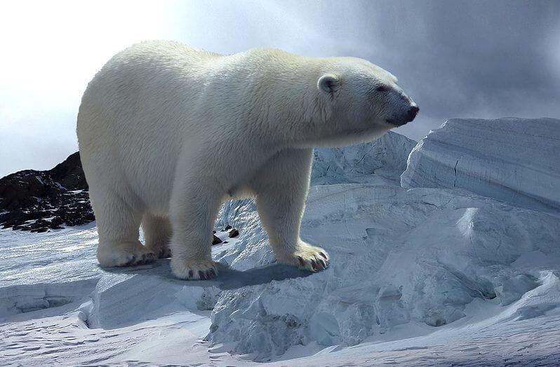 Habitat of a Polar Bear