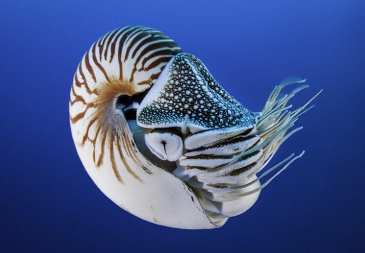 Nautilus Animal That Start with N