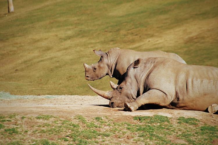 What Rhinos Eat Based on Habitat