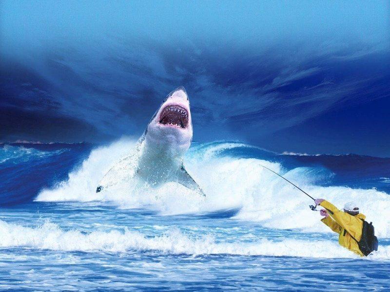 The Habitat of Great White Shark