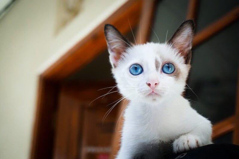 Boy Cat Names White