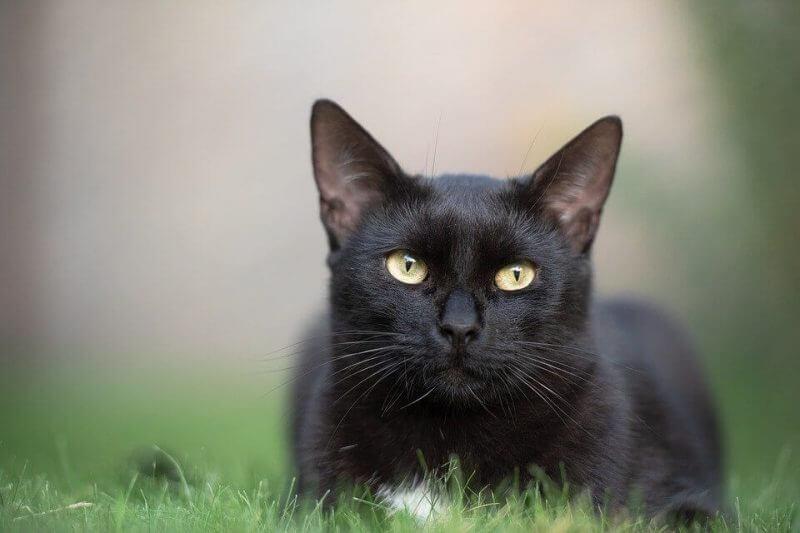 Girl Cat Names Black