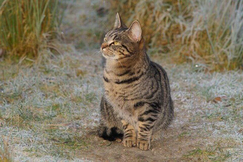 Girl Cat Names Unique