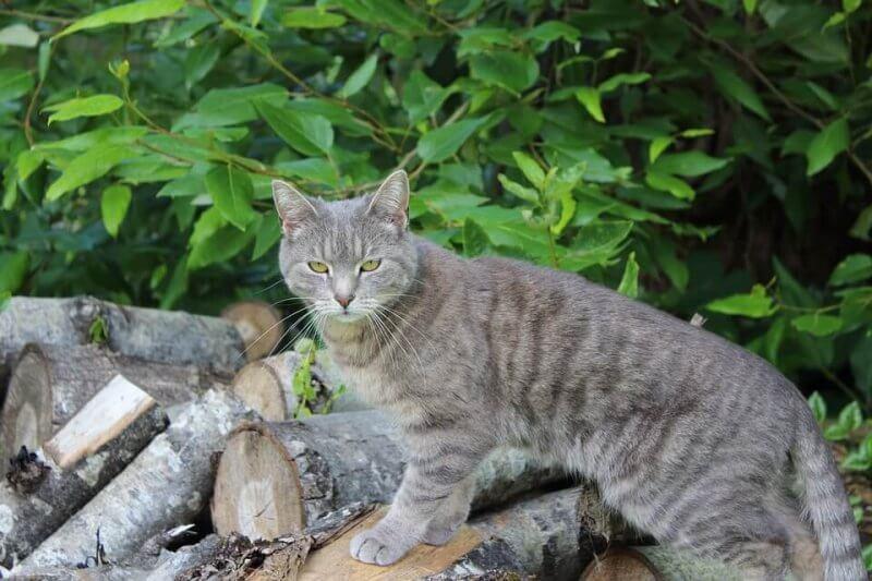 Girl Cat Names Grey