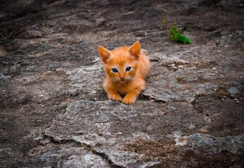 Boy Cat Names Orange