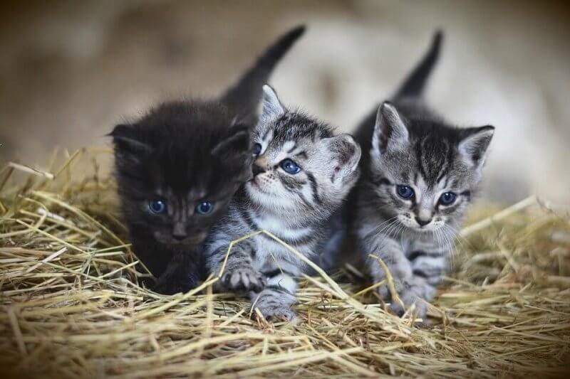 Boy cute cat names