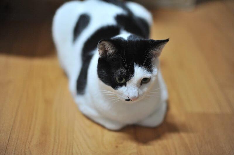 Girl Cat Names Black and White