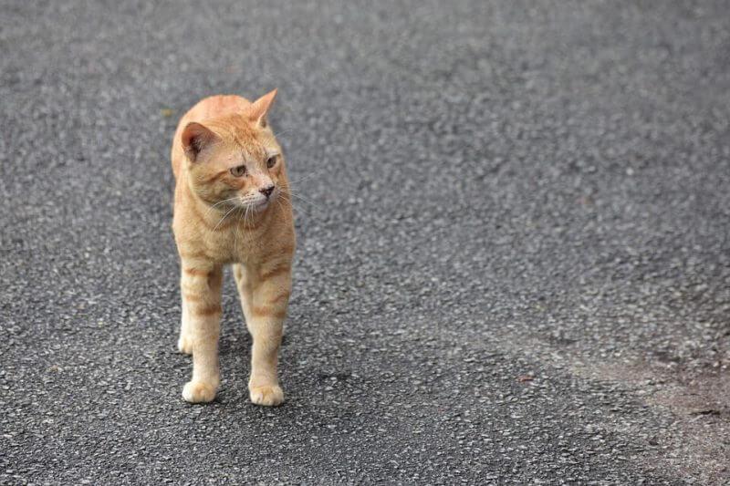 Girl Cat Names Orange