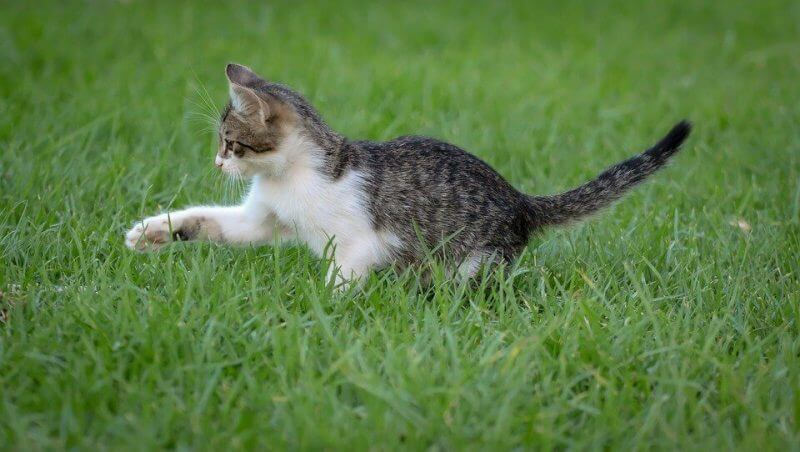 Awesome Boy Cat Names