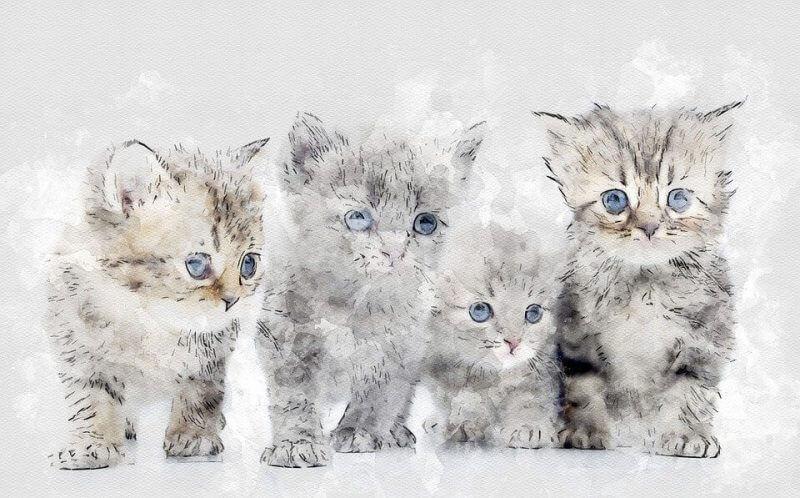 Adorable Boy Cat Names