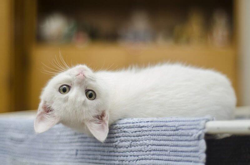 Girl Cat Names White
