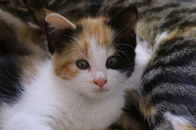 Girl Cat Names Cute