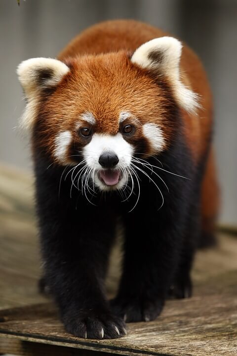 List of Cute Animal in the World