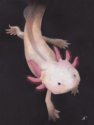 Axolotl Cute Animal