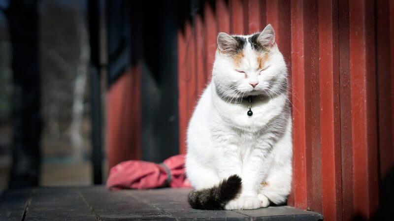 Popular cut cat picture