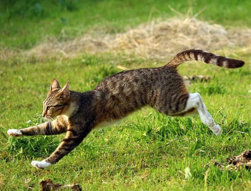 The average speed of cat is 50 kilometer per hour