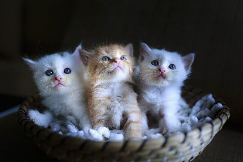 Cute kids cat pictures