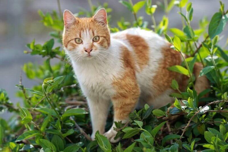 Orange cat picture