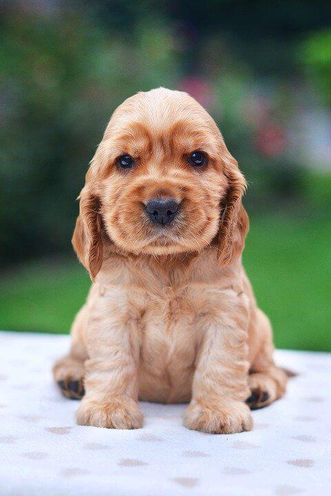 Girl Dog Names Unique