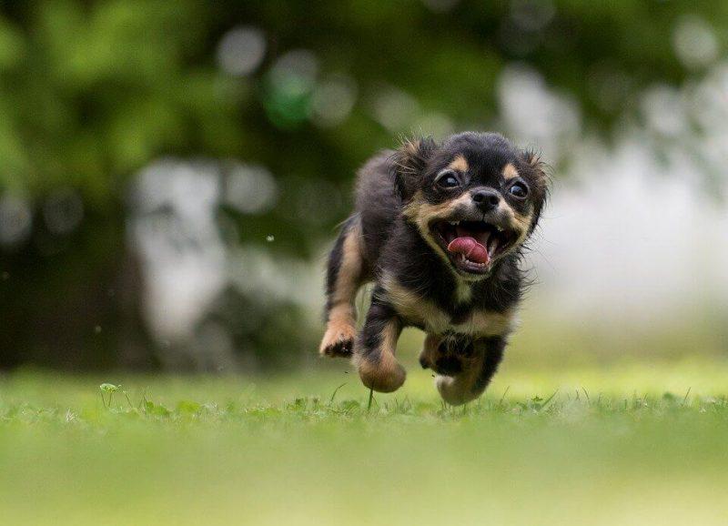 Girl Dog Names / Female Dog
