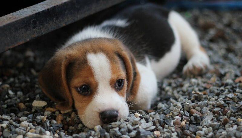 German Boy Dog Names