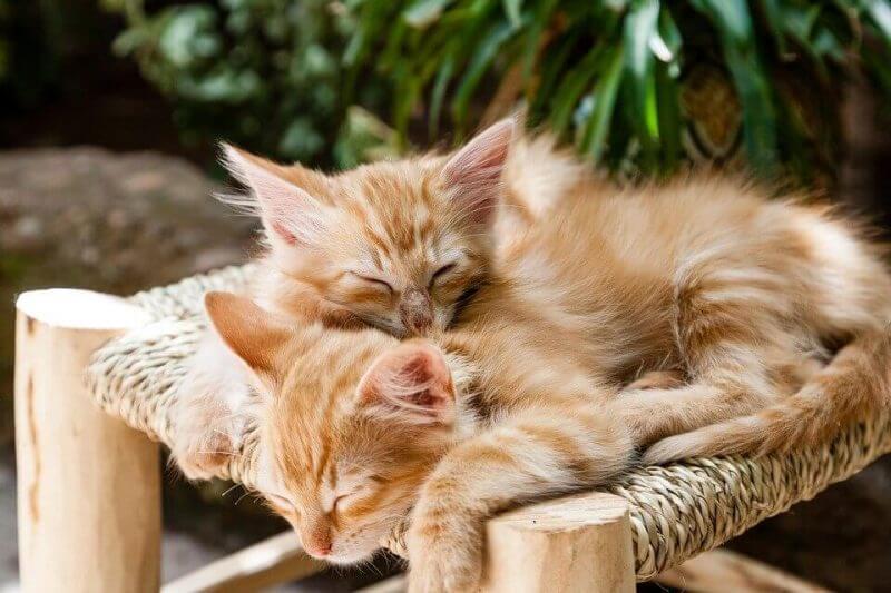 Cut cat sleep picture