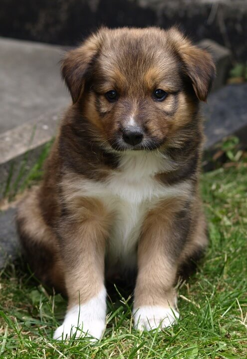 Girl Dog Names that Start with C