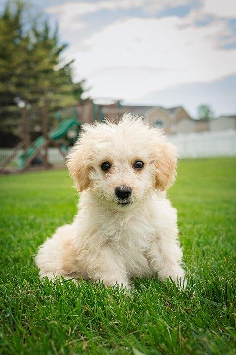 Girl Dog Names Cute