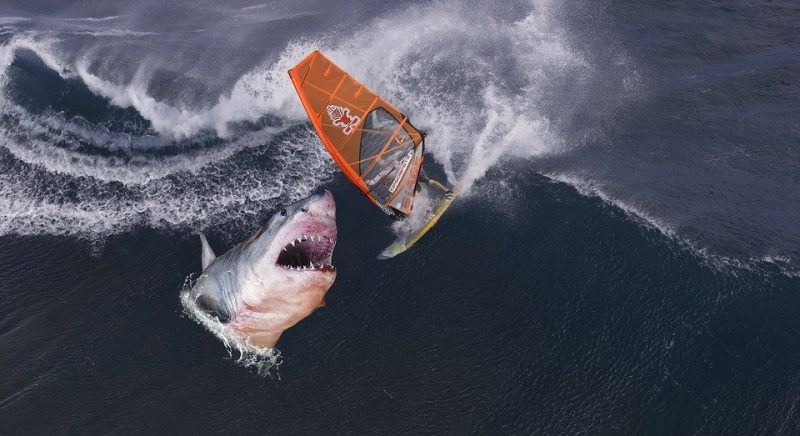 Tiger sharks eat everything, including human rubbish